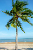 Coconut Palm Tree, Deck Chair, Indian Ocean, Palm Tree, Plant