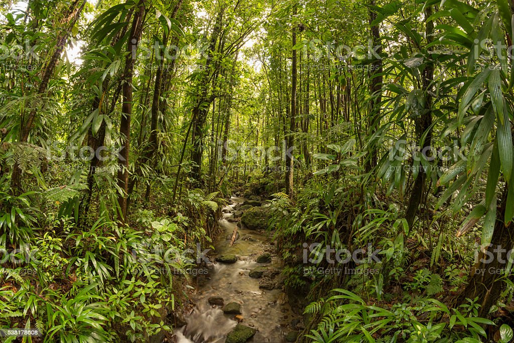 Tropical jungle and river in Dominica stock photo