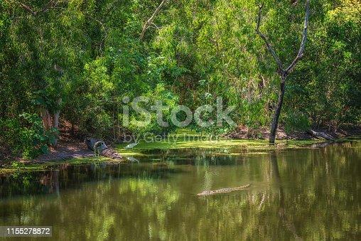 istock Tropical jungle and their inhabitants near Wangetti, Queensland, Australia 1155278872