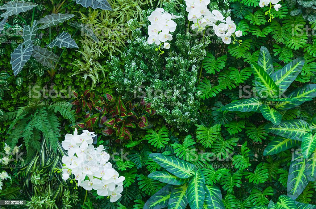 Tropical jungle as  with rich green plants photo libre de droits