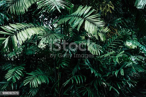 istock Tropical Jungle Background 936092570
