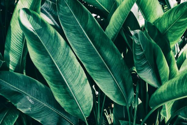 tropical jungle leaf stock photo
