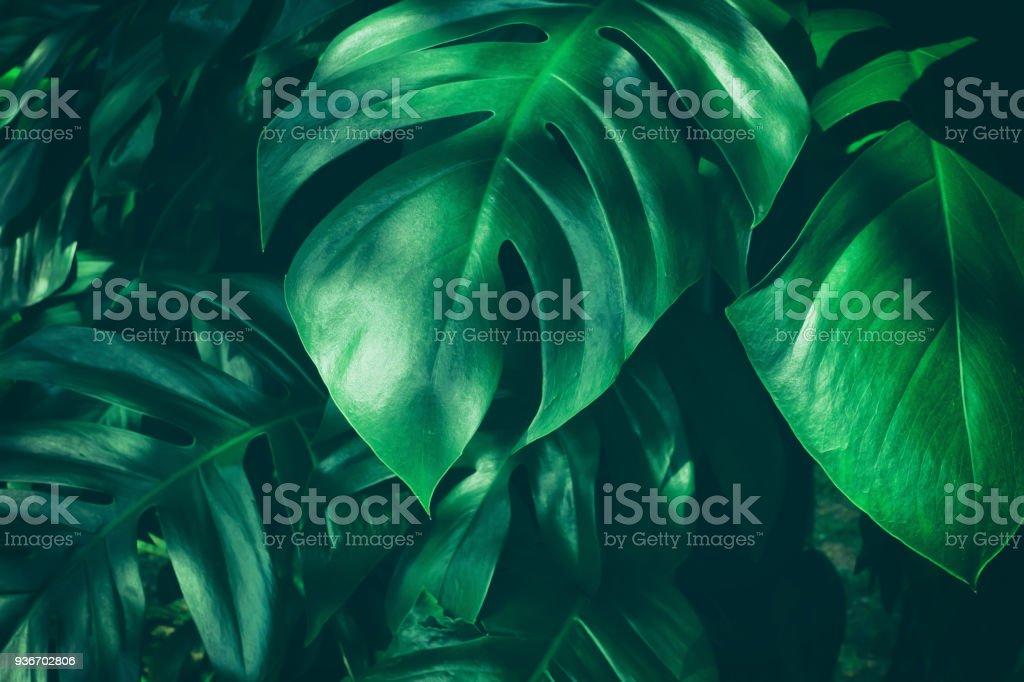 열 대 정글 잎 - 로열티 프리 0명 스톡 사진