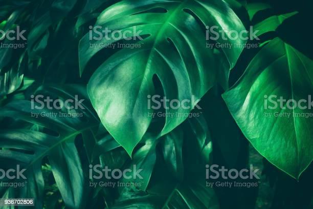 Tropical jungle leaf picture id936702806?b=1&k=6&m=936702806&s=612x612&h=8irmkxbiewcxtougkyczkjbtkvg6a2yqpydxqymiuos=