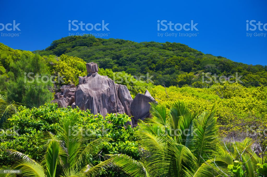 Tropical jungle of Seychelles stock photo
