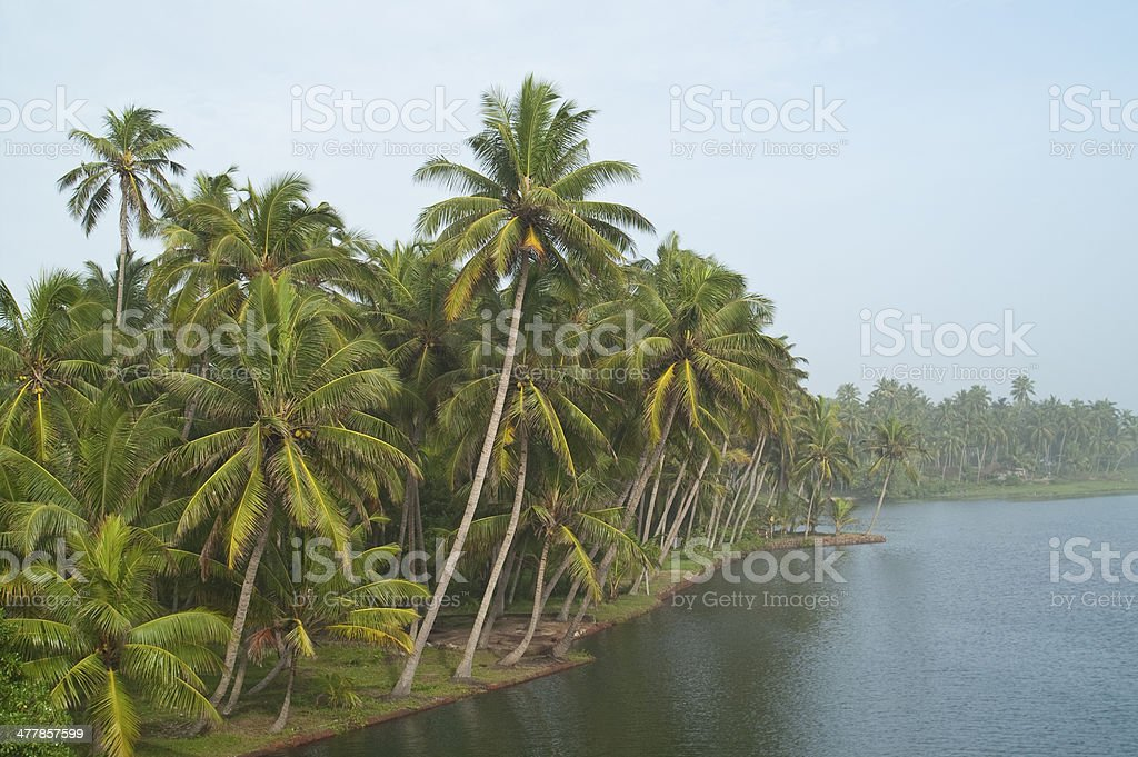Tropical jungle on the river royalty-free stock photo