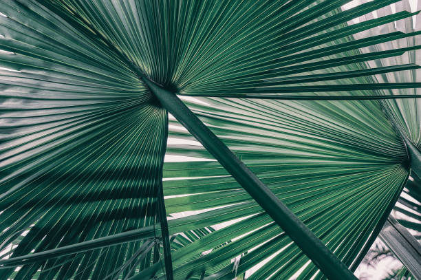 tropical jungle palm leaf - botany stock pictures, royalty-free photos & images