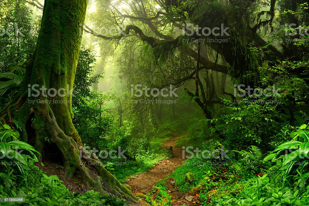 Tropical jungle stock photo
