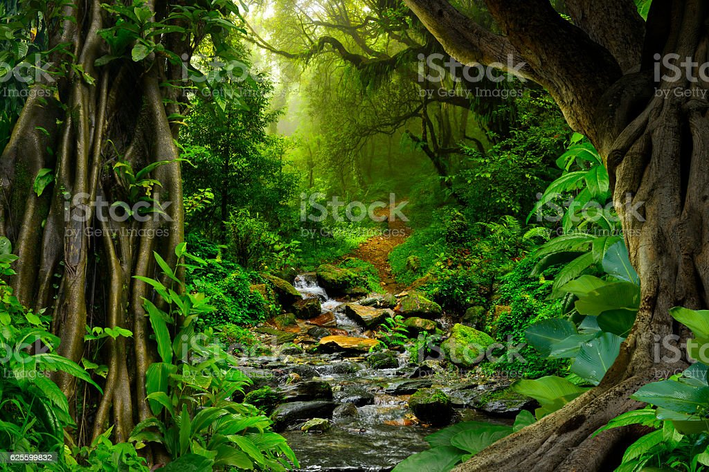 Giungla tropicale - foto stock