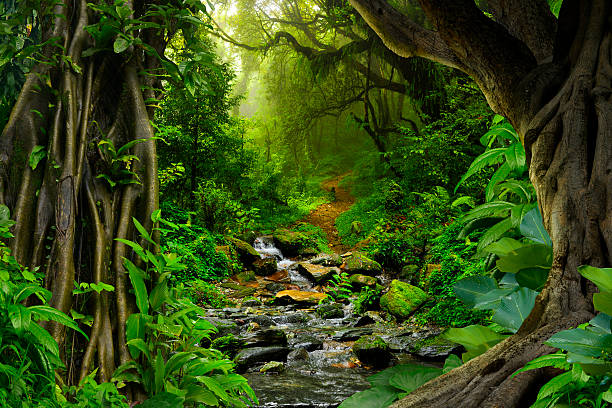 Rainforest Sounds - Water Sound Nature Meditation - YouTube |Tropical Rainforest Photography