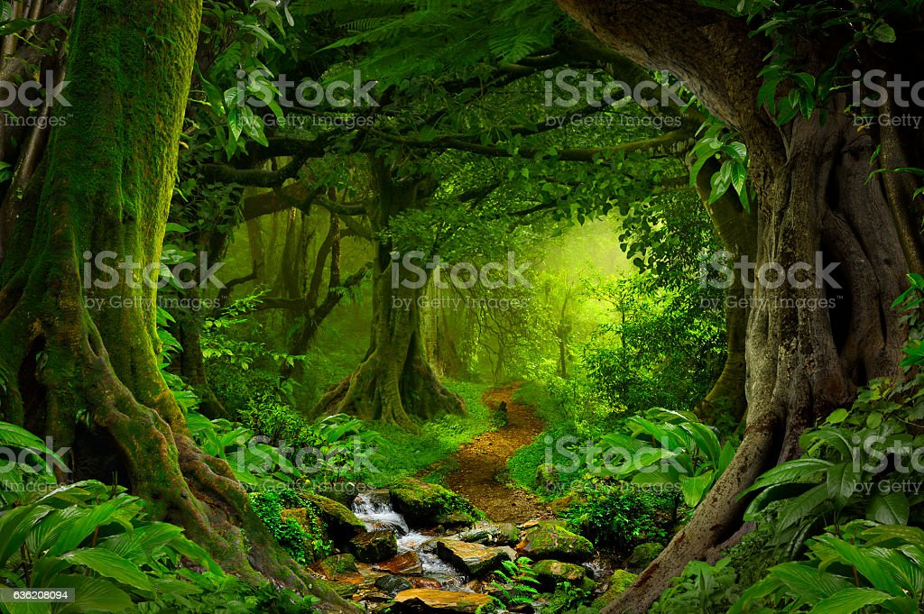 Tropical jungle royalty-free stock photo