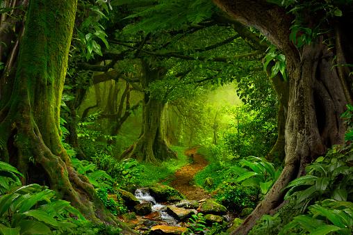 istock Tropical jungle 636208094