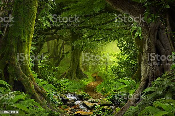 Tropical jungle picture id636208094?b=1&k=6&m=636208094&s=612x612&h=zjw5lkmdy6gxm bbn7af7rgyydj1gyybgefmz8xz eu=