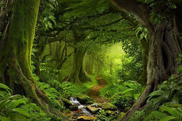 tropical jungle - forest bildbanksfoton och bilder