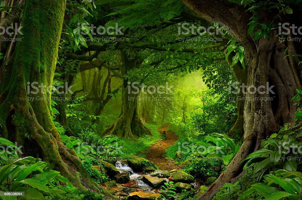 トロピカルジャングル ストックフォト