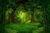 トロピカルジャングル