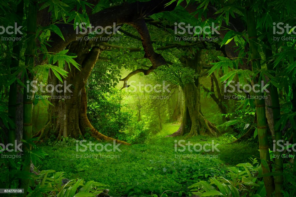 Tropical jungle - foto stock