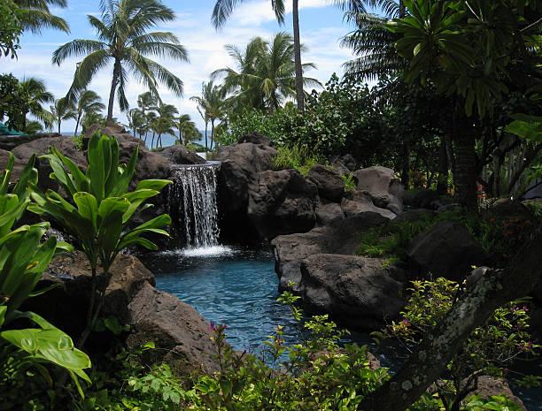 lagoa e cascata tropical - jardim do eden - fotografias e filmes do acervo