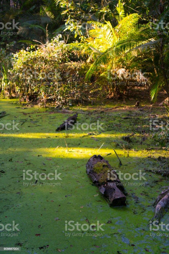 tropical lake in Khao Yai National Park, Thailand stock photo