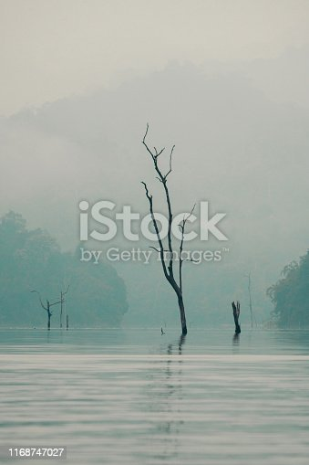 Bare twisted tree in a lake