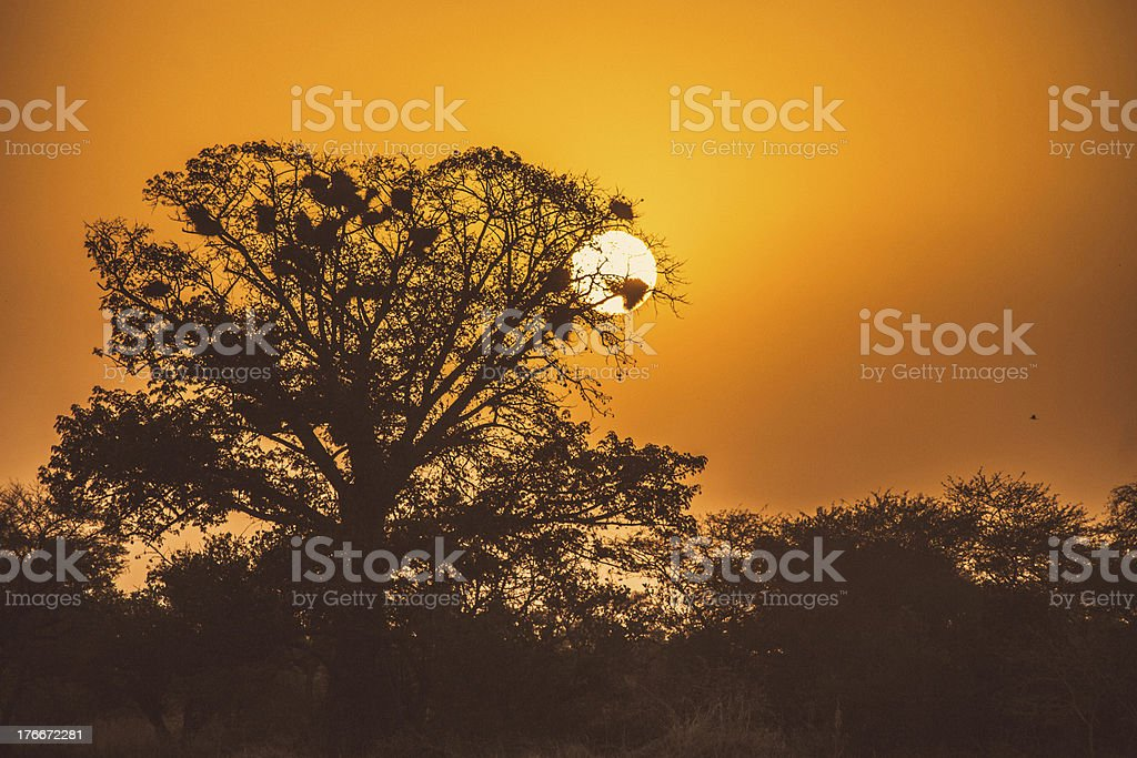 Tropical landscape in sunset light. royalty-free stock photo