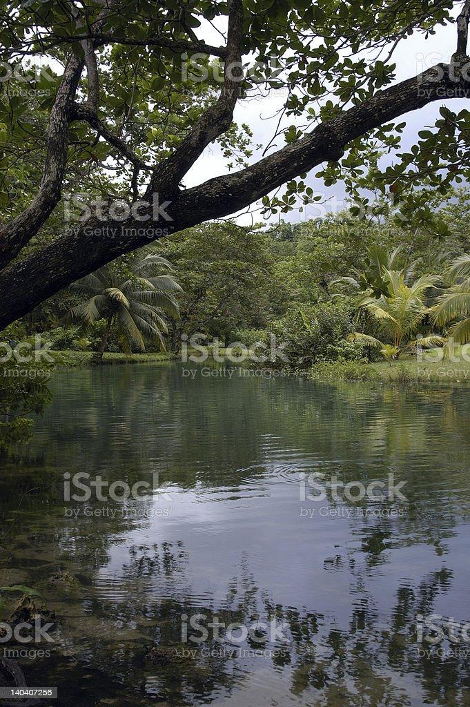 Tropical Landscape Jamaica stock photo