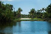 Tropical Landscape in Miami