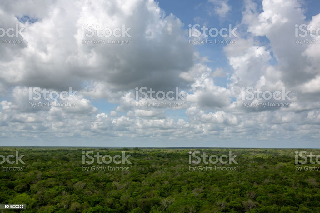 Tropical landscape of trees in jungle rain forest in Mexico royalty-free stock photo