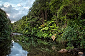 tropical landscape with green trees and ferns on the river bank reflecting the forest and the clouds