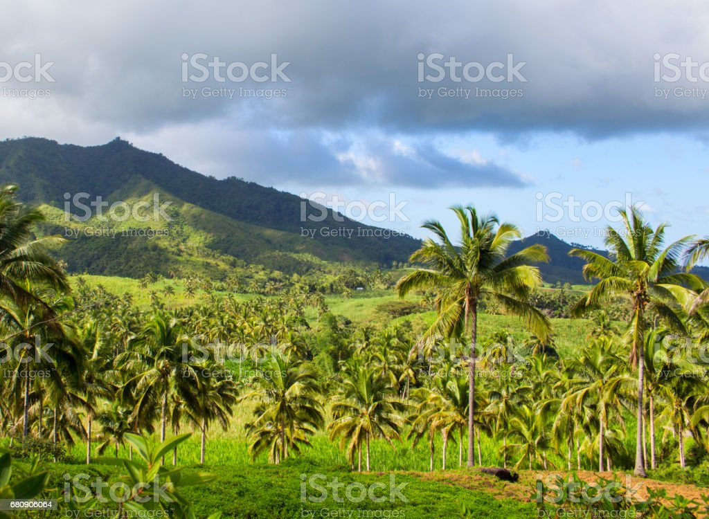 Tropical landscape with palm tree and mountain. Blue sky view with coco palm trees. royalty-free stock photo