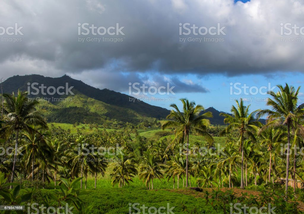 Tropical landscape with palm trees and forest. Distant mountain or hill green silhouette. royalty-free stock photo