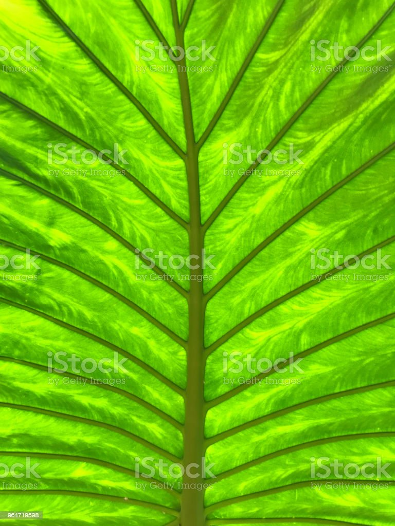 Tropical leaf art royalty-free stock photo