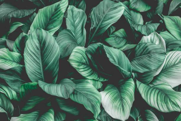 熱帶葉子背景, 自然背景 - 大自然 個照片及圖片檔