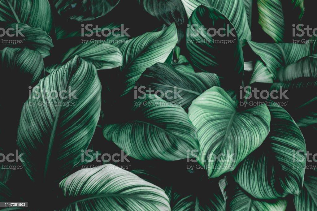 Tropical leaf background - Zbiór zdjęć royalty-free (Abstrakcja)