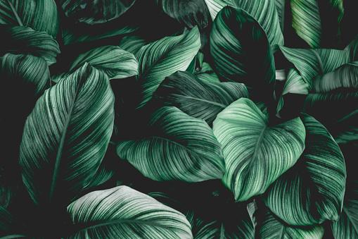 Tropical Leaf Background - zdjęcia stockowe i więcej obrazów Abstrakcja