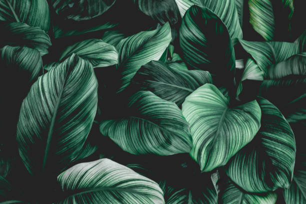tropical leaf background - lush foliage stock pictures, royalty-free photos & images