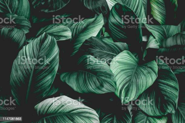 Photo of Tropical leaf background