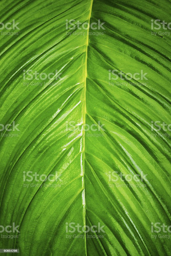 Tropical Leaf Background royalty-free stock photo