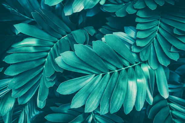 tropical leaf, blue toned - foliate pattern stock photos and pictures