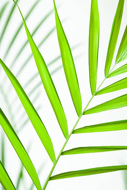 Hoja Tropical en primer plano - foto de stock