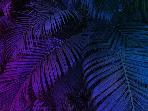 tropical leaf exotic background with neon glow colors, palm tree backdrop