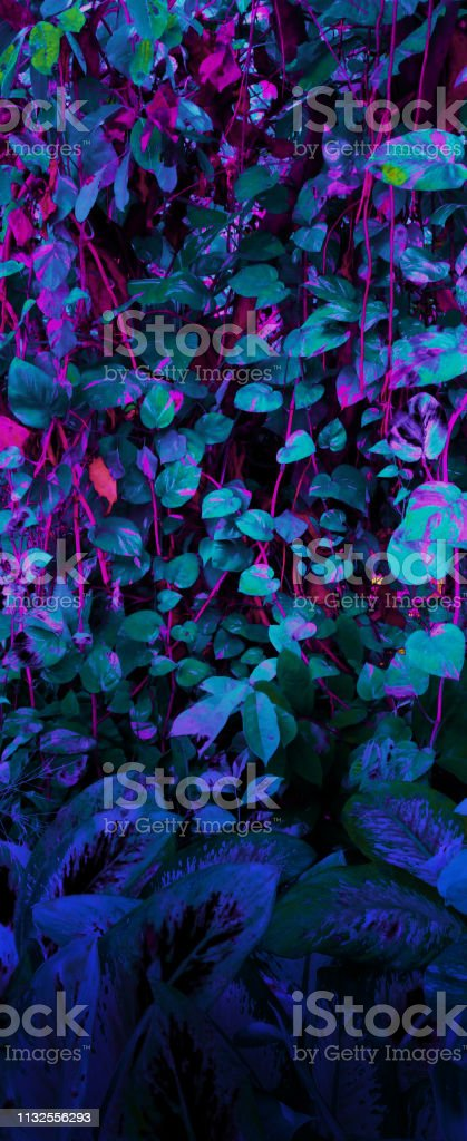 Tropical leaf forest glow in the black light background. High contrast. stock photo