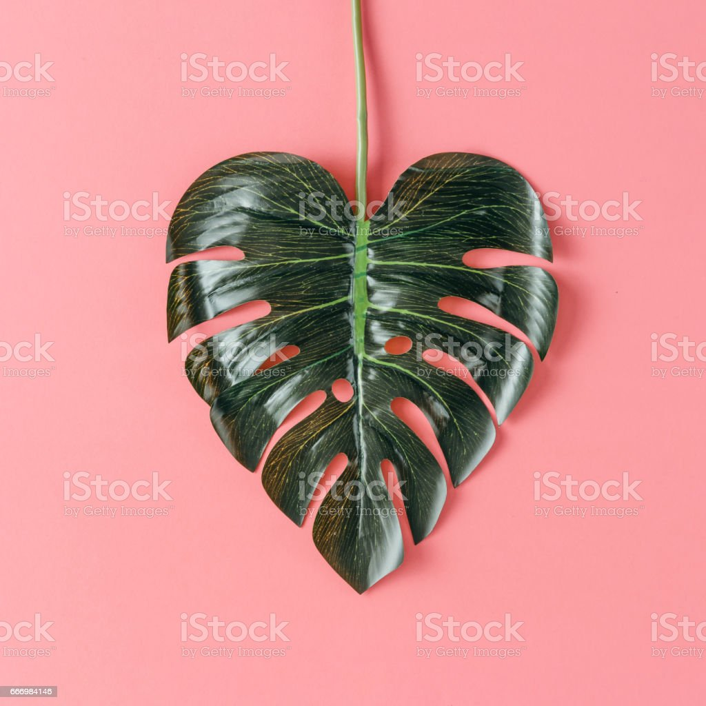 Tropical leaf in shape of a heart. Mothers day love concept. Flat lay. stock photo