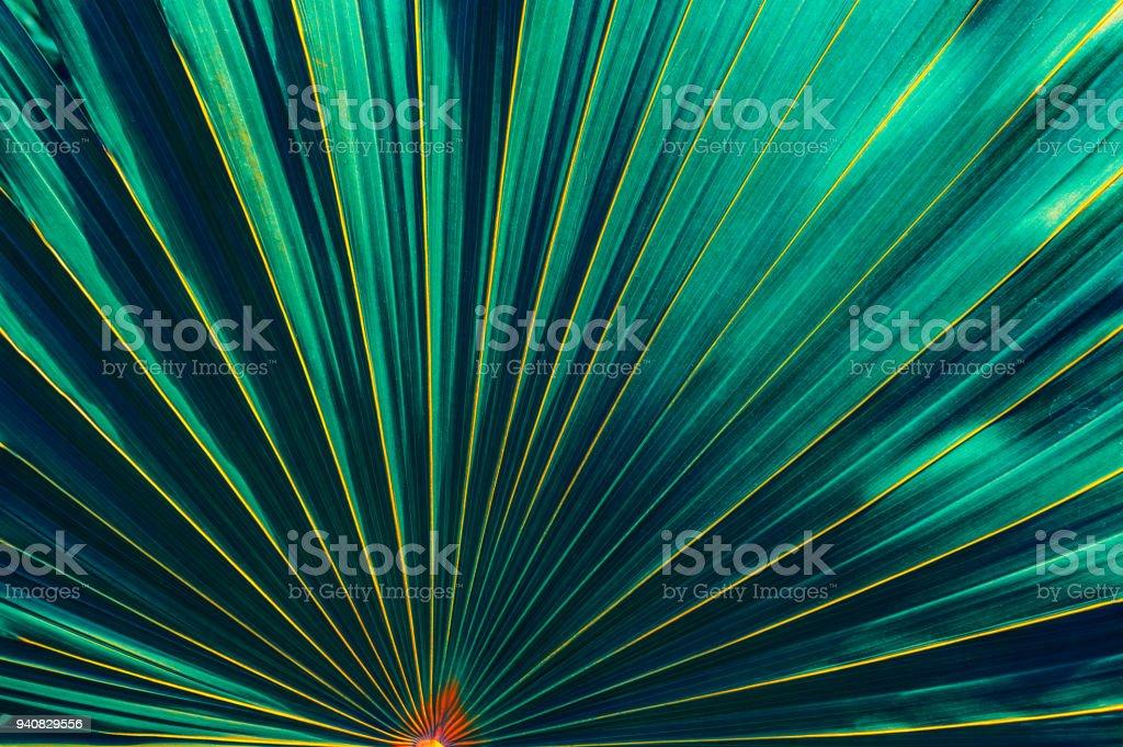 tropical leaf stock photo