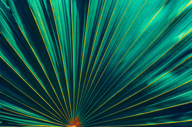 tropical leaf large palm leaf for backgrounds exoticism stock pictures, royalty-free photos & images