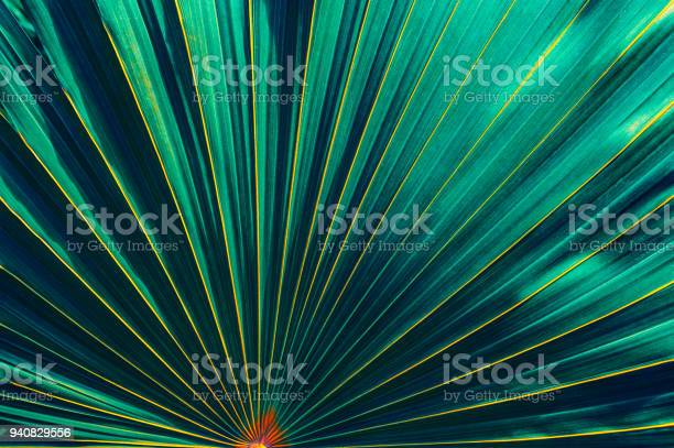 Photo of tropical leaf