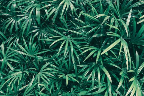 fond de texture feuille tropique - motif tropical photos et images de collection