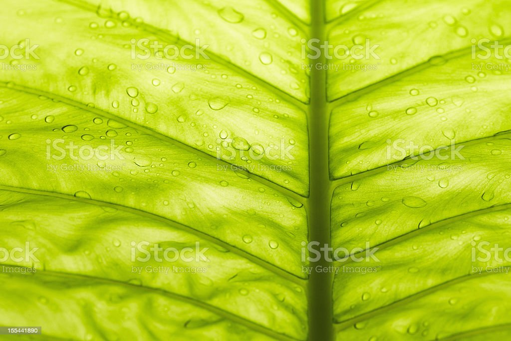 tropical leave royalty-free stock photo
