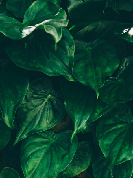tropische blätter abstrakten hintergrund. - blumendrucktapete stock-fotos und bilder