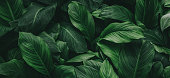 istock tropical leaves, abstract green leaves texture, nature background 1254474165